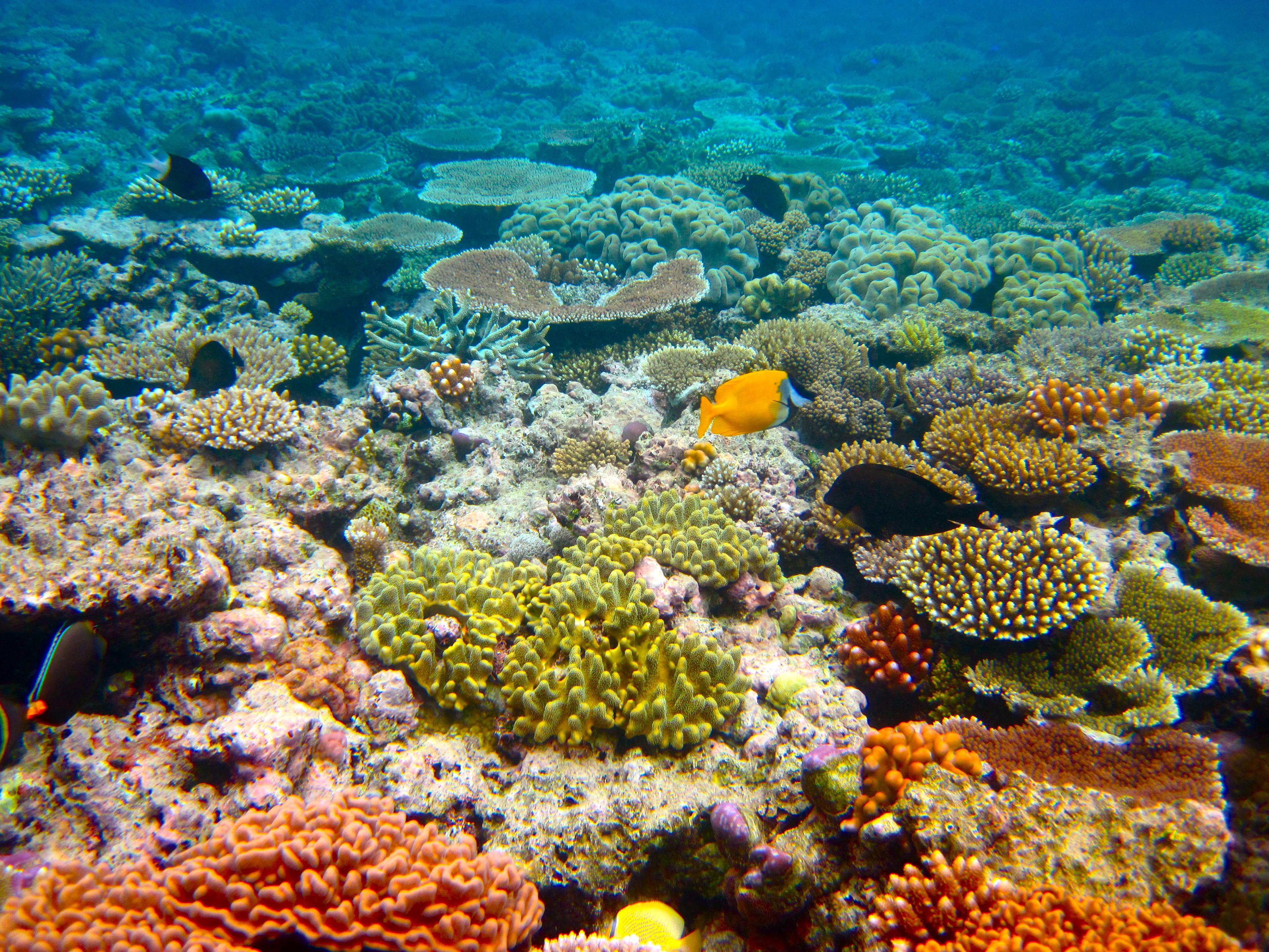 barriera corallina _ Kyle Taylor