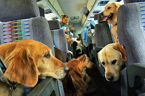 Viajando con tus mascotas a Barcelona - la Ley Española
