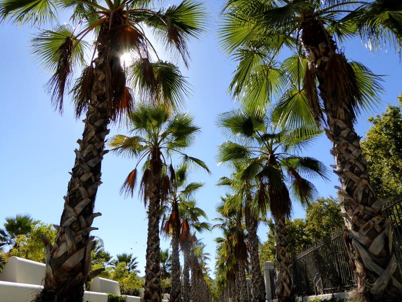 Palmen Malaga Freibeuter reisen